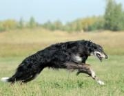 哈佛大学的管理经典:猎狗的故事