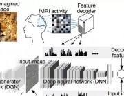 日本京都大学新研究:AI 读取脑波,重建人类思维