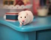AI能验毒了,动物会因此离开实验室的樊笼吗?