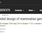 人工智能模拟哺乳动物细胞,构建「细胞电路」模型